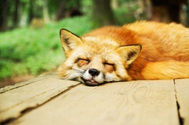 【睡眠改善】毎日眠い…あなたが深い眠りにつけない4つの理由と対処法